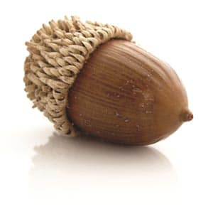 acorn-V2