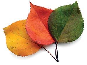 leaf-trio